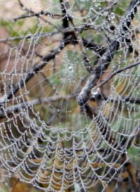 023 Pearly Web